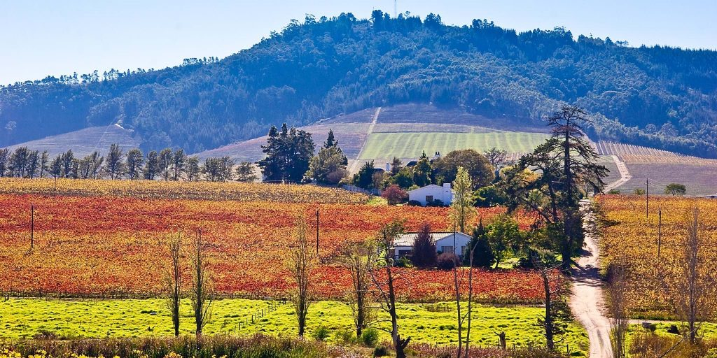 Top places in South Africa,the winelands