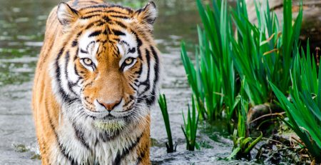 Top places in Bangladesh, Sundarban