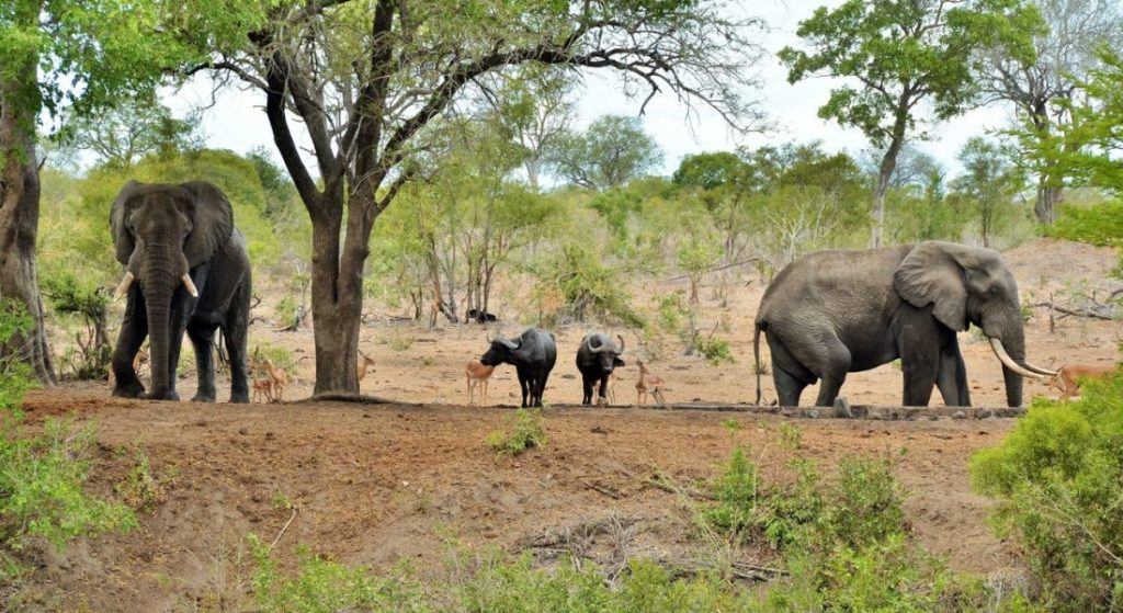 Kruger National Park South African Safari Attraction