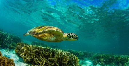 The Iconic Great Barrier Reef